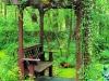 backyard-arbor